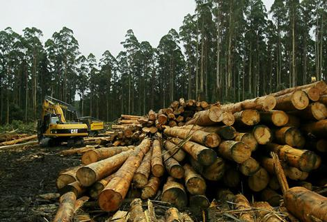 Job Vacancy For Production Manager Timber Wood Industry